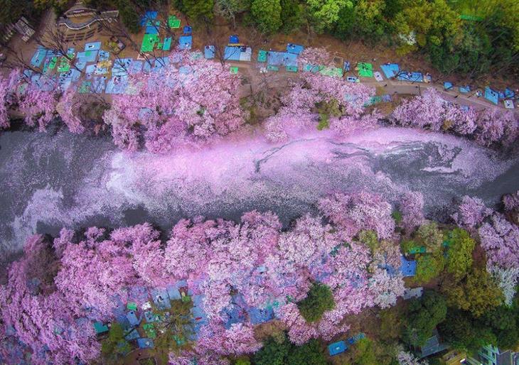 Раз в году это японское озеро превращается в волшебное место для незабываемого свидания