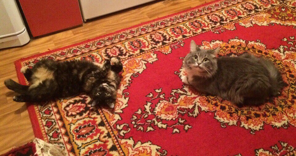 Они хотели сделать доброе дело и подобрали котёнка на улице! Но кто же знал, что всё так обернётся? кошки