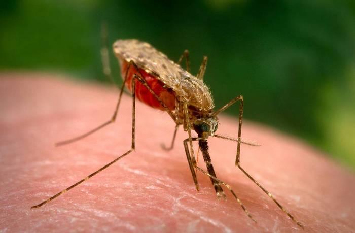 Народные рецепты и средства от укуса комаров