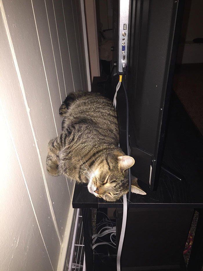 """""""Вот так любит спать кошка моего бойфренда"""" всемирное тяготение, забавно, закон гравитации, истории в картинках, неожиданно, против законов физики, удивительно, удивительное рядом"""