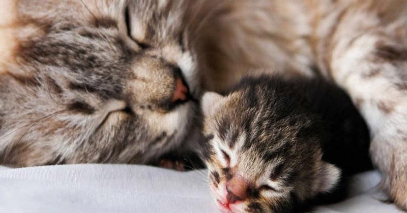 Котенку снился плохой сон. То, что сделала его мама — просто прекрасно!