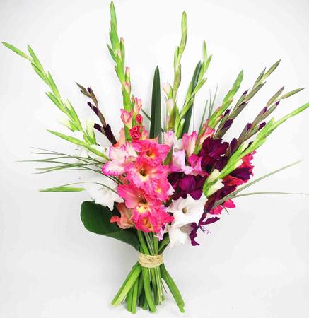 Гладиолусы символизируют страстную любовь - цветы на День Святого Валентина - 14 февраля