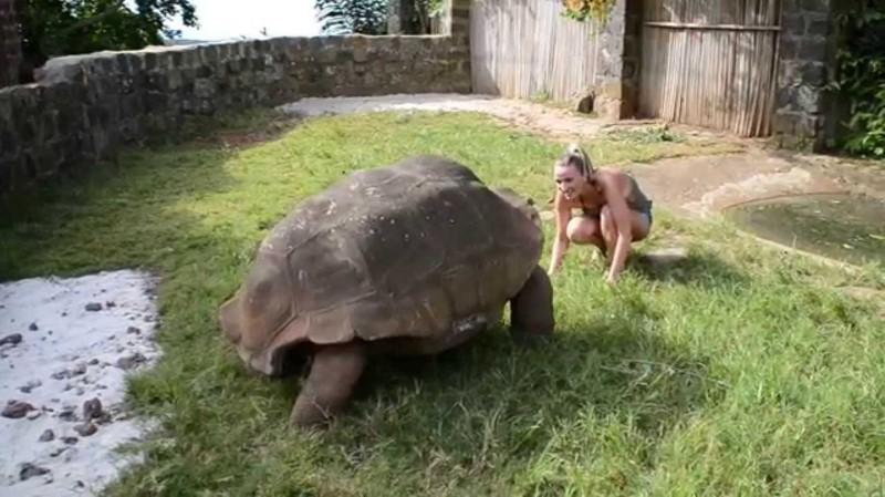 3. Гигантская черепаха вид, вымысел, гигант, животные, мир, правда, природа, фото