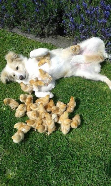 Поиграем, малышня? животные, мамочки
