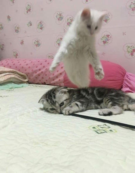 """""""Мой Котя лучше всех!"""" Владельцы устроили фото-бой, чтобы выяснить, чей кот круче!"""
