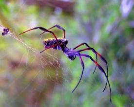 Приметы и суеверия коричневый паук ползет навстречу. Народная примета — паук в доме.