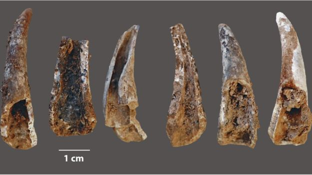 Crab claws smashed open by Neanderthals at the cave
