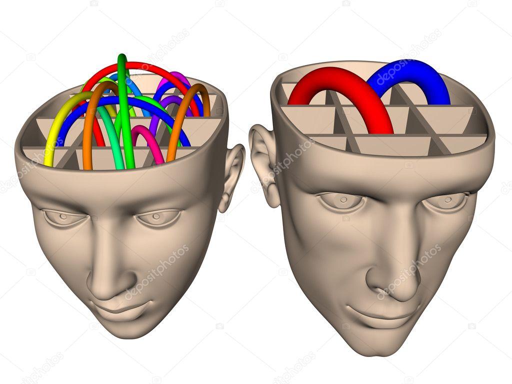 Отличия в устройстве мозга м…