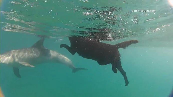 Плавающий с дельфином пес стал звездой сети