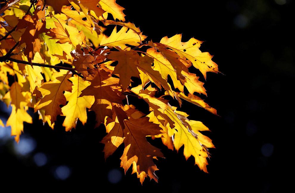 Осенние пейзажи 2018