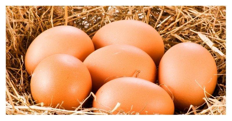 7 мифов о куриных яйцах