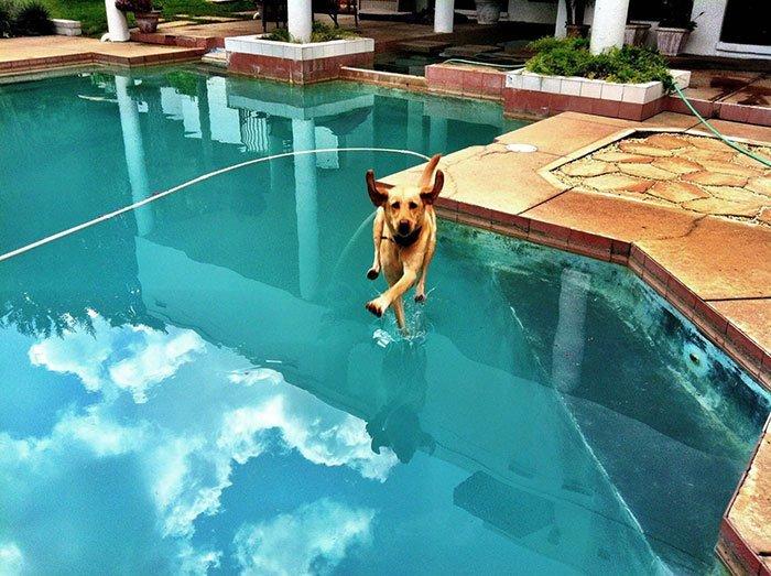 """""""Собаки - большие специалисты в беге по воде"""" всемирное тяготение, забавно, закон гравитации, истории в картинках, неожиданно, против законов физики, удивительно, удивительное рядом"""