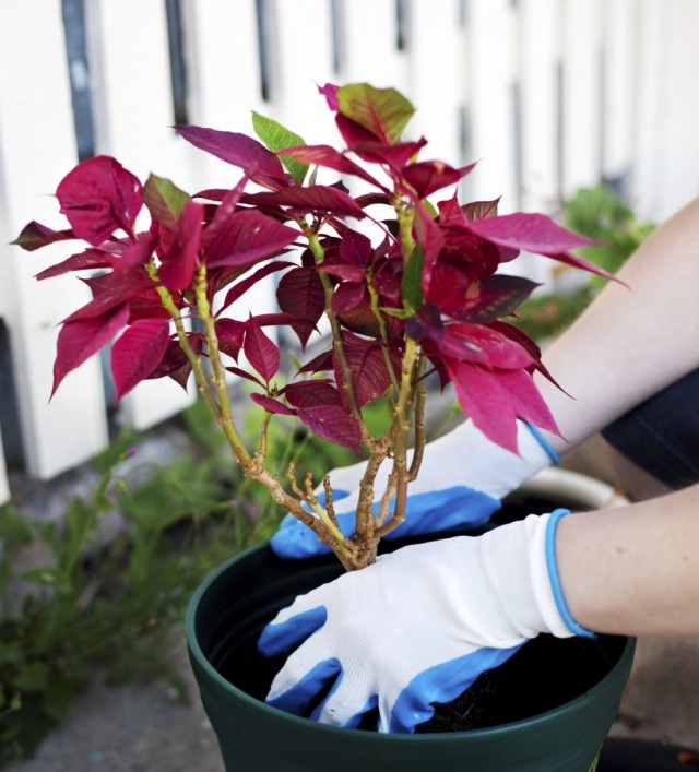 Срочная пересадка комнатных растений