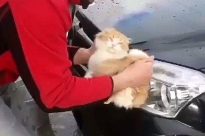 На Кубани мужчина помыл котом машину, полиция проводит проверку