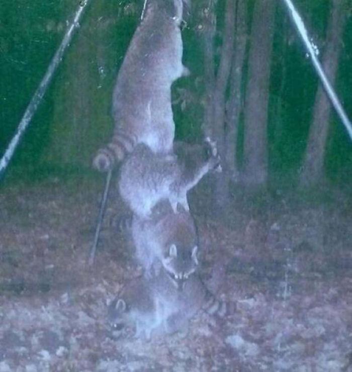 Жизнь животных скрытой камерой
