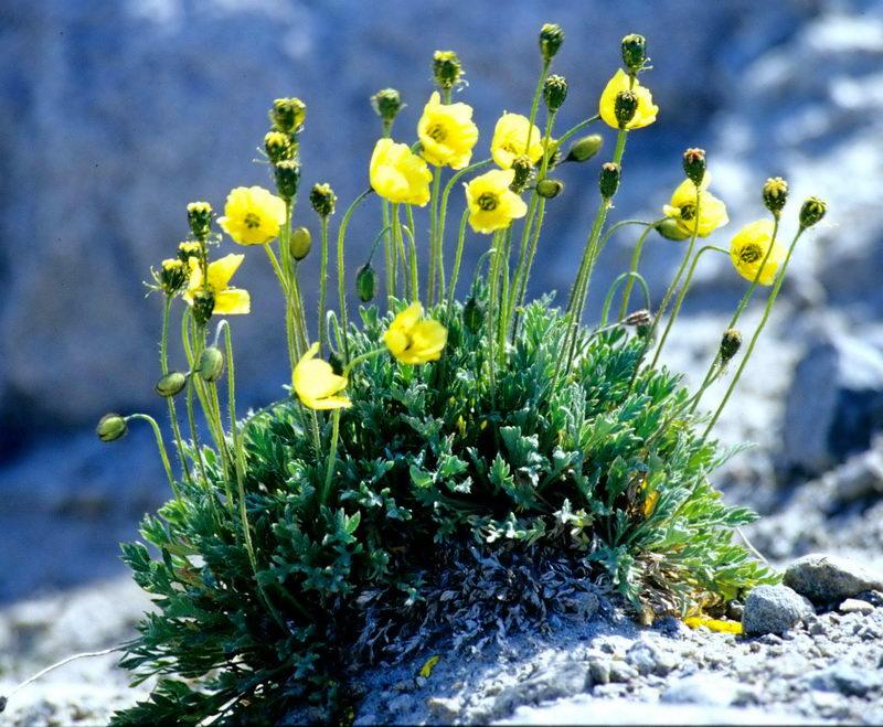 Цветы, цветы на севере россии