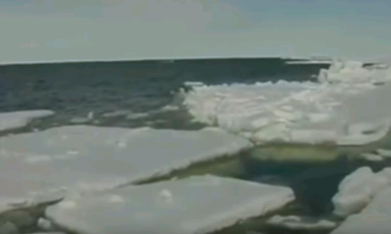 Российские ученые займутся очисткой побережья Арктики от нефти
