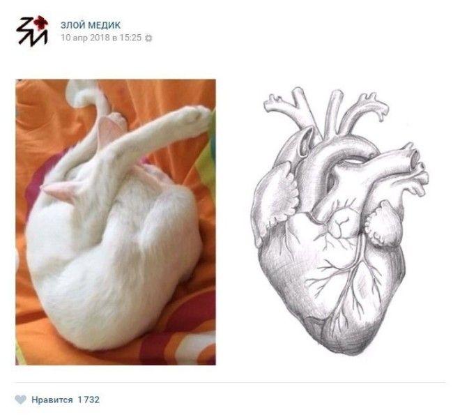 S18 подтверждений что у сотрудников медицины своеобразное чувство юмора
