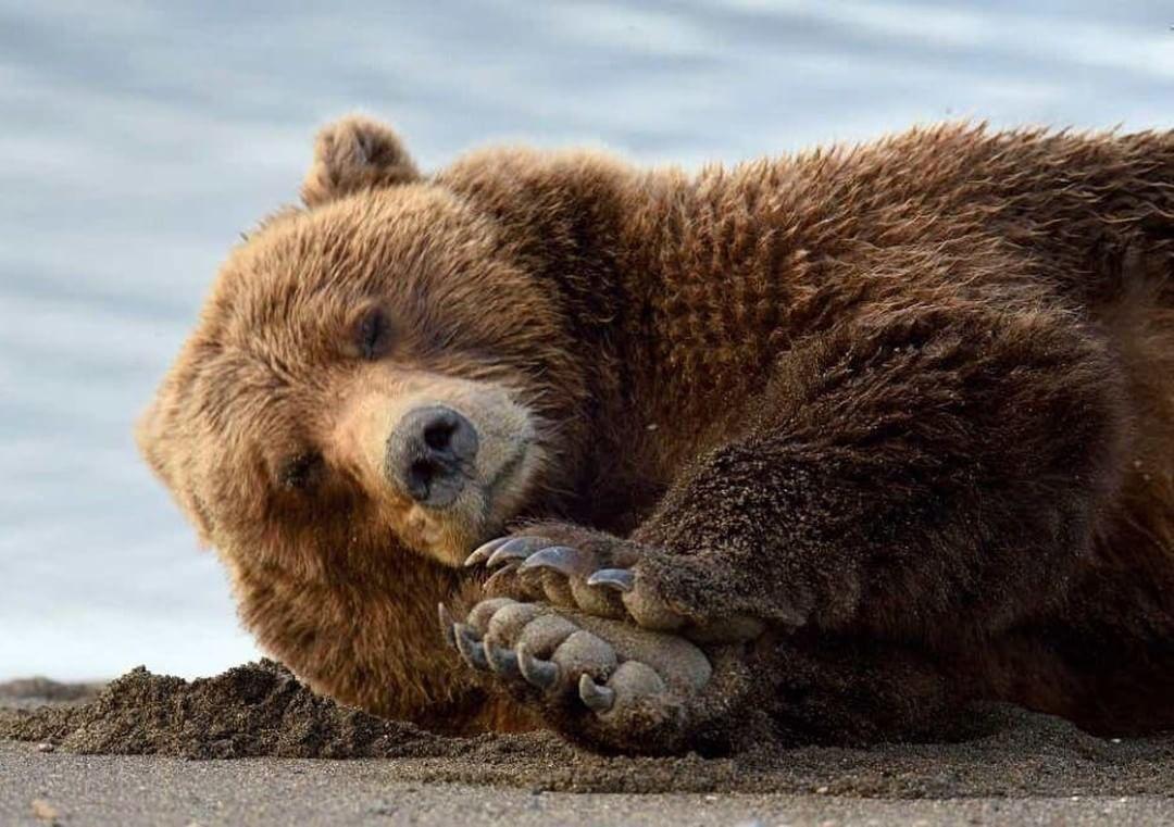 Картинки, медвежонок картинки смешные