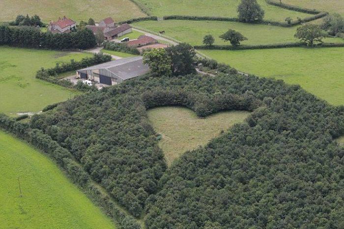 После смерти супруги мужчина высадил 6 000 дубов. Лишь через 20 лет люди поняли его задумку…