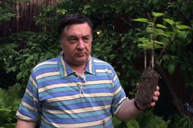 Хитрость от Андрея Туманова: укоренение черенков смородины