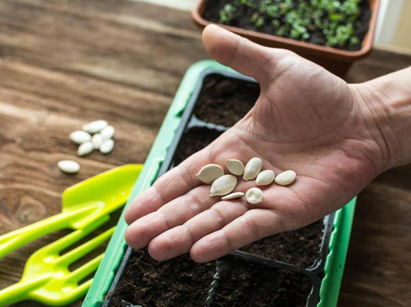 3 распространенных мифа о семенах, которые бытуют среди садоводов