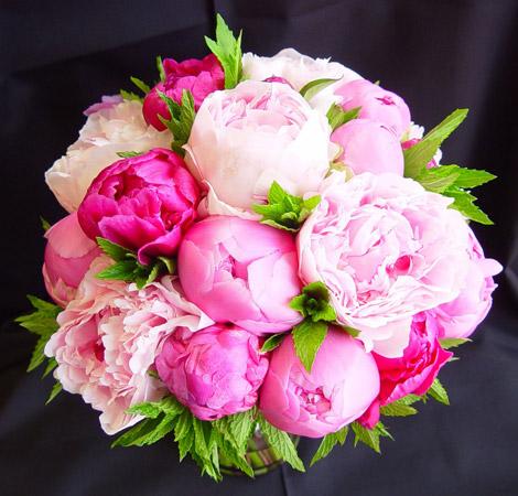 Пионы символизируют любовь - цветы на День Святого Валентина - 14 февраля