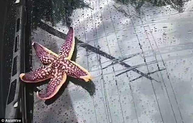Местные жители поделились снимками необычного явления. Синоптики отказались подтверждать, реальны ли фотографии. ynews, инцидент, китай, новости, погода, тайфун, фото, шторм