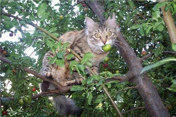 20 забавных фото котов-дачников
