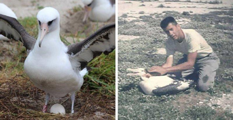 Самая старая в мире дикая птица отложила яйцо, хотя ей уже почти 70 лет в мире, мудрость, птица, ученые, чайка, яйцо