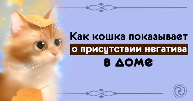 Как кошка показывает о прису…