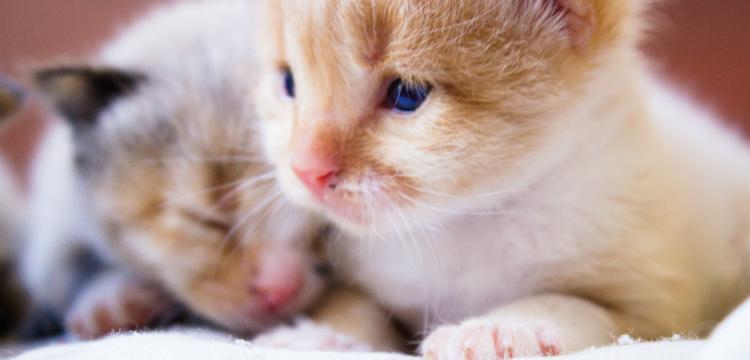 Милые и беззащитные. 10 фактов о новорождённых котятах и щенках