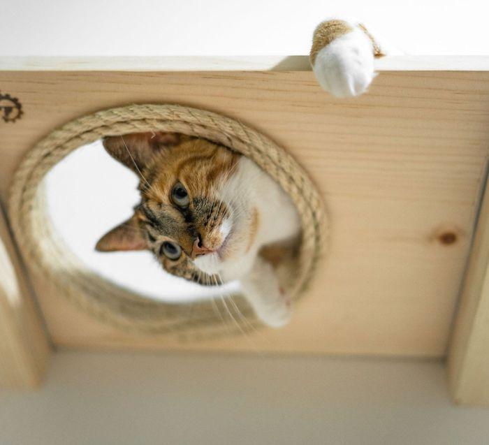 Сладкая кошачья жизнь: настенные системы для активных кошек домашние животные,кошки,мебель для кошек,наши любимцы