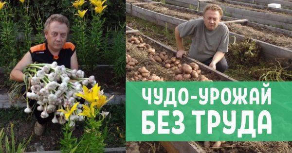 Огород Игоря Лядова – чудо, посильное каждому