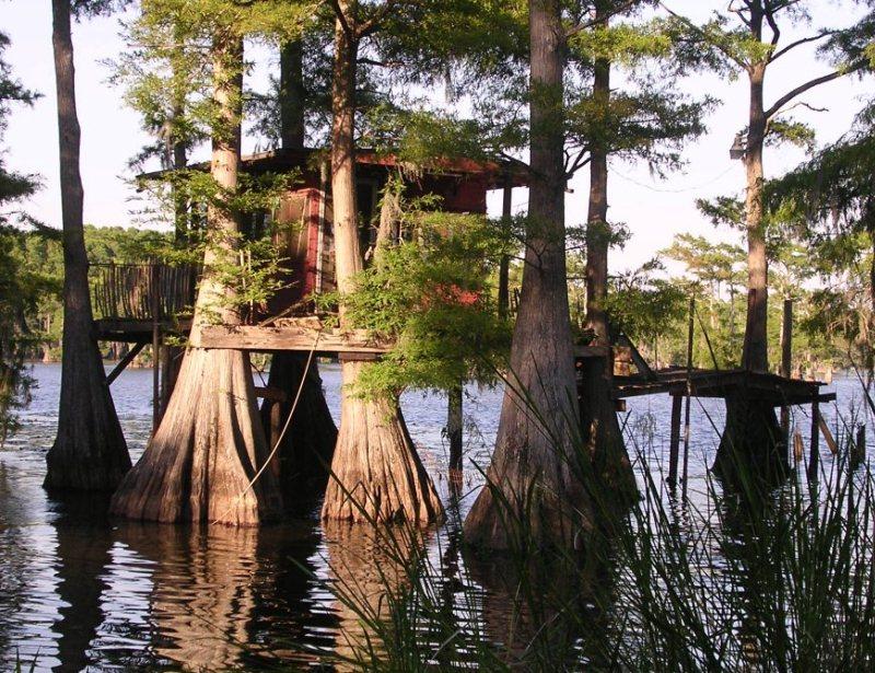 Сказочные кипарисы на озере Каддо в Техасе, США автотуризм