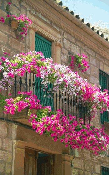 Композиции цветов для балкон…