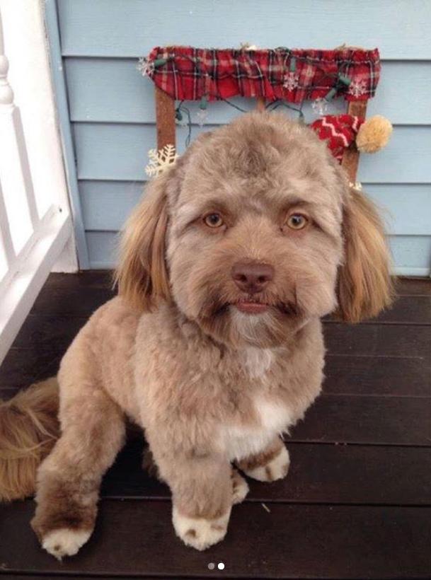 Собачка с человеческими черт…