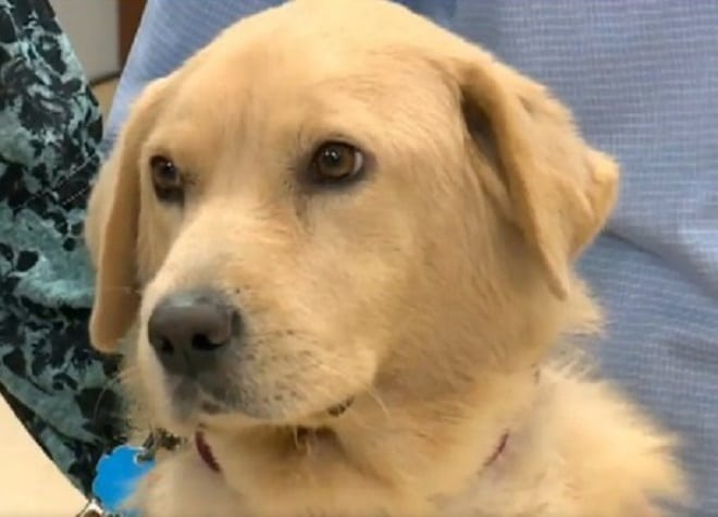 У собаки отказывали почки, а лечение не помогало. Спасти животное могла только необычная операция