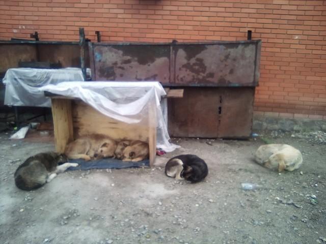Мне не жалко людей, я жалею собак, Голодающих на вокзалах; Я жалею котят, что сидят в коробках…