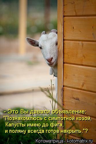 """""""Куплю козу без дурных привычек...''"""