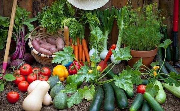 Народные средства в саду и огороде: помогают или вредят?
