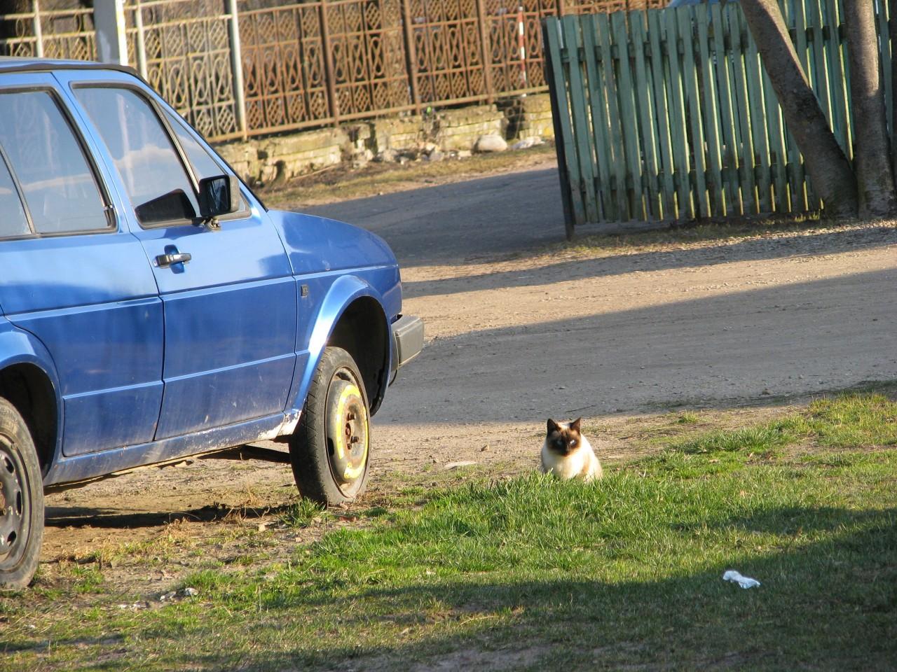 Братья наши меньшие: почему кот бунтует?