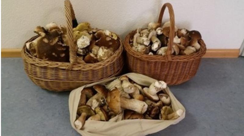 Грибники в Германии собрали почти 20 кг боровиков и получили огромный штраф