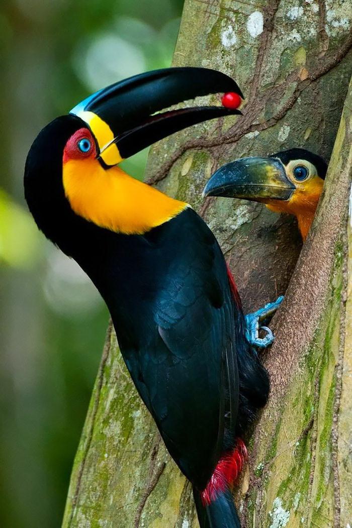 все про птиц с картинками что если скажу
