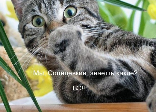 аудио книга о коте мартыне.