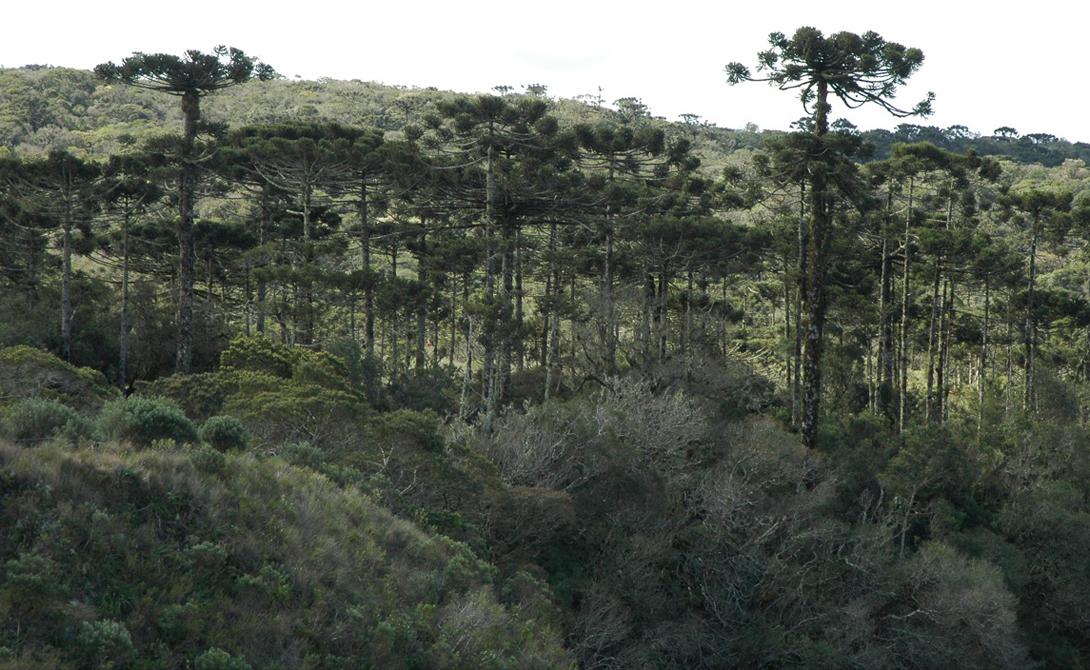 Самые древние леса этого мира