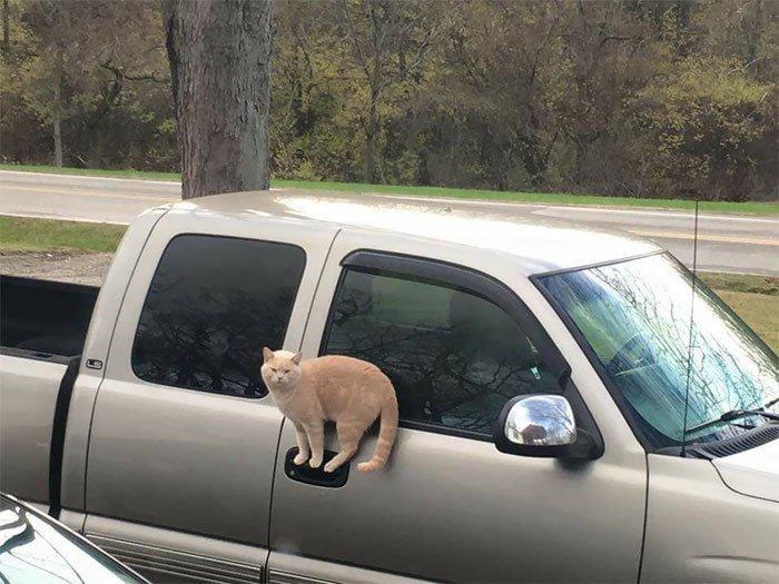 Ловкий котик всемирное тяготение, забавно, закон гравитации, истории в картинках, неожиданно, против законов физики, удивительно, удивительное рядом