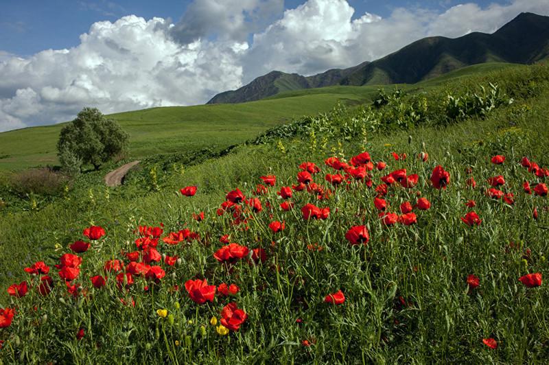 12. Вот такой он — аленький цветочек Кыргызстана art, Кыргызстан, пейзаж, ссср, факты