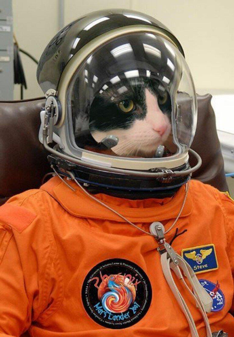 Фото приколы день космонавтики