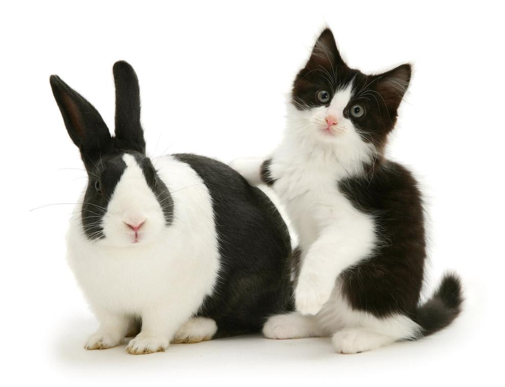 За вдв прикольные картинки с кроликами для